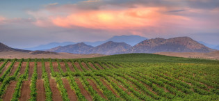 Exploring California Wine Country: September 8-12, 2013